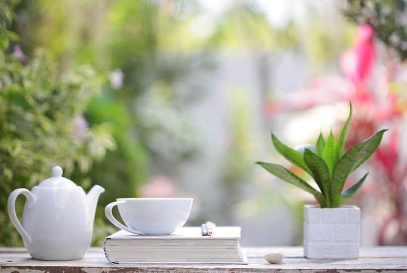 Diario con taza, tetera y planta