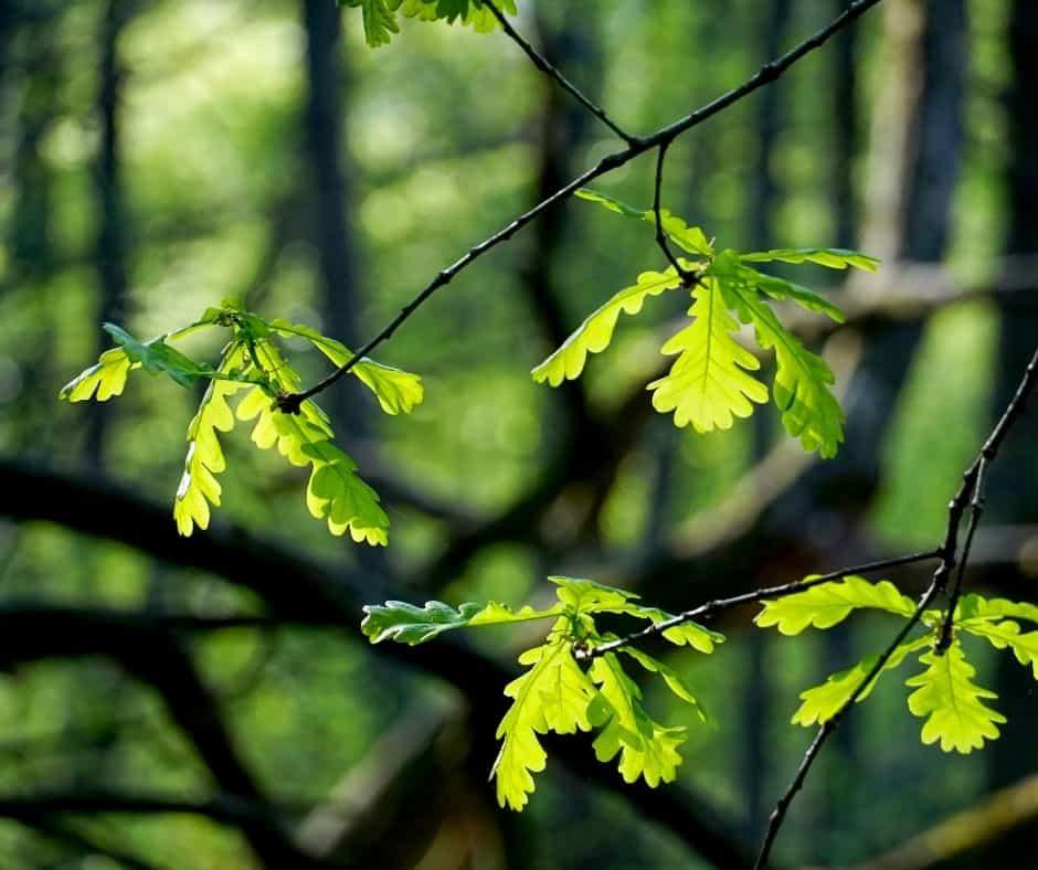 Hojas verdes de árbol