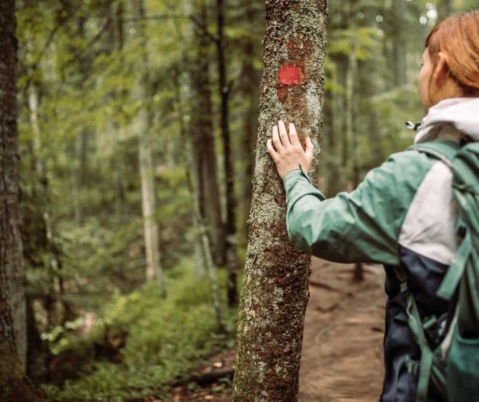 Mujer practicando mindfulness en el bosque disfrutando la naturaleza